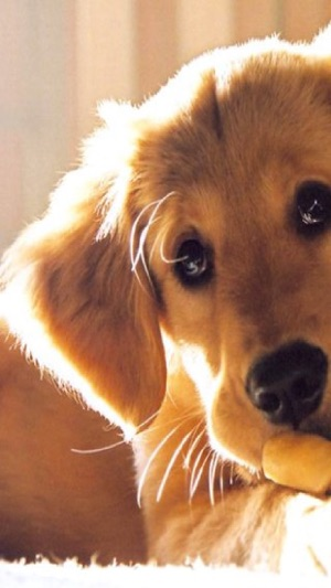 Cute Dog Puppies High Defination Wallpaper Catalog On The