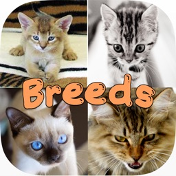 Cute Cat Breed Quiz Games