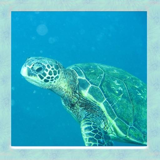 Sea Turtle Simulator 3D