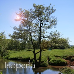 Tree Id - British Tree Identification Guide
