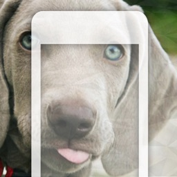 99 Wallpaper.s - Beautiful Backgrounds and Pictures of Dogs and Puppies