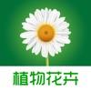 植物花卉 - 识花认草,花草种植养护技巧,多肉植物,植物百科