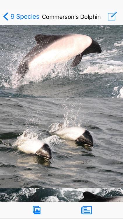 Antarctic Wildlife Guide