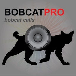 REAL Bobcat Calls - Bobcat Hunting - Bobcat Sounds