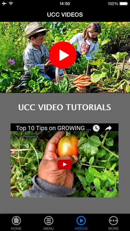Grow Your Own Groceries for Beginners - Reduce Your Grocery Bill For a Lifetime