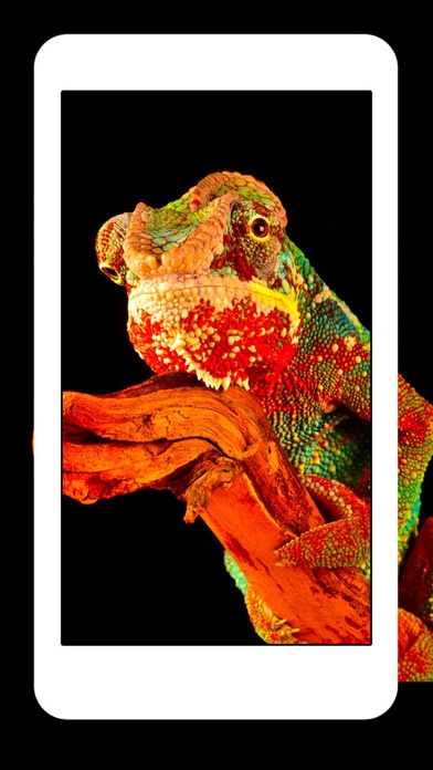 ヘビ トカゲ クモ綱 ワニ - 動物 爬虫類 壁紙 Wallpapersのおすすめ画像4