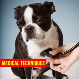 Pet First Aid - Responsibilities of a Pet Owner