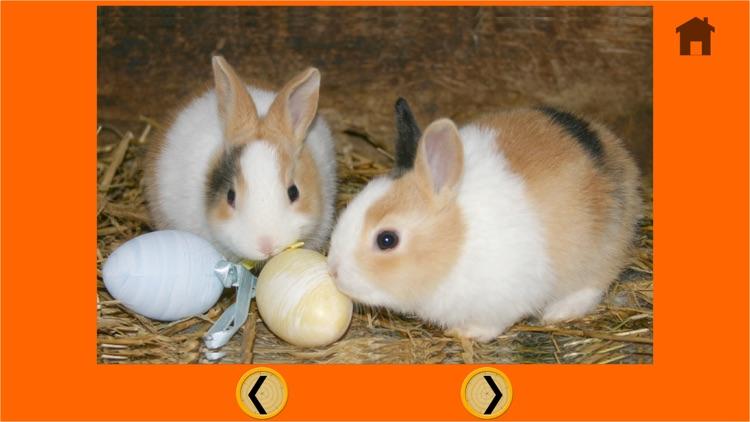 friendly rabbits for kids - no ads