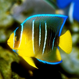 Reef Fishes Encyclopedia