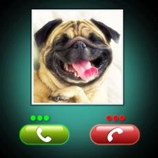 Activities of Fake Call Dog Prank