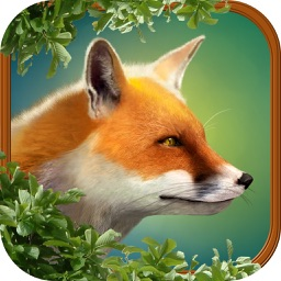 Zoo: Animal Story