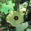 Flowers Colors Puzzles