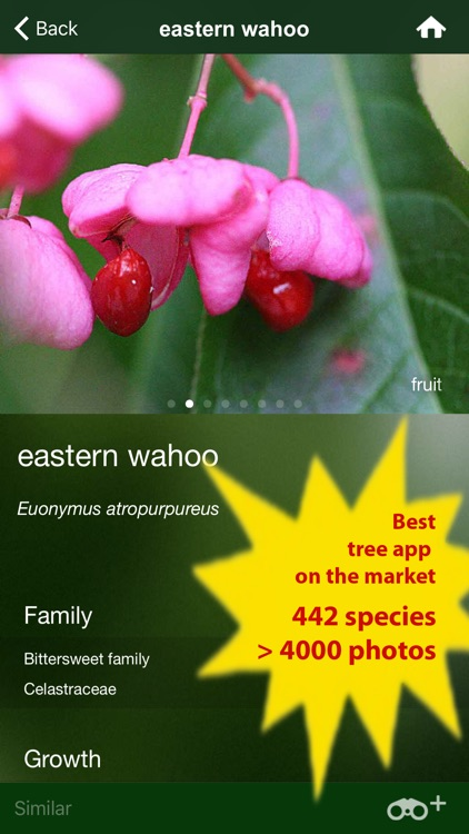 Tree Id Canada - identify over 1000 native Canadian species of Trees, Shrubs and Bushes