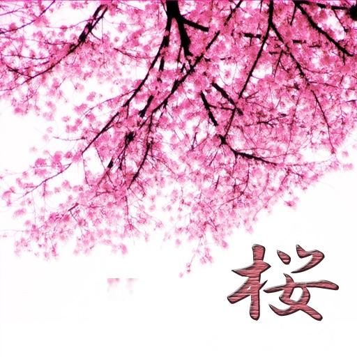 Sakura Spots