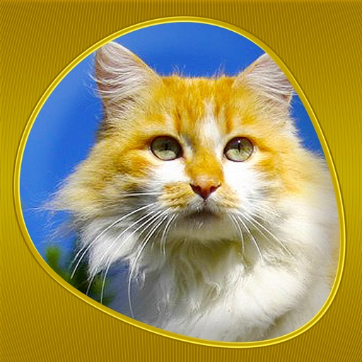 Cats 360 Gold