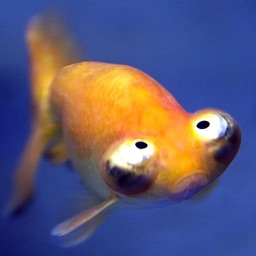 Fish Jokes - Best, cool and funny jokes!