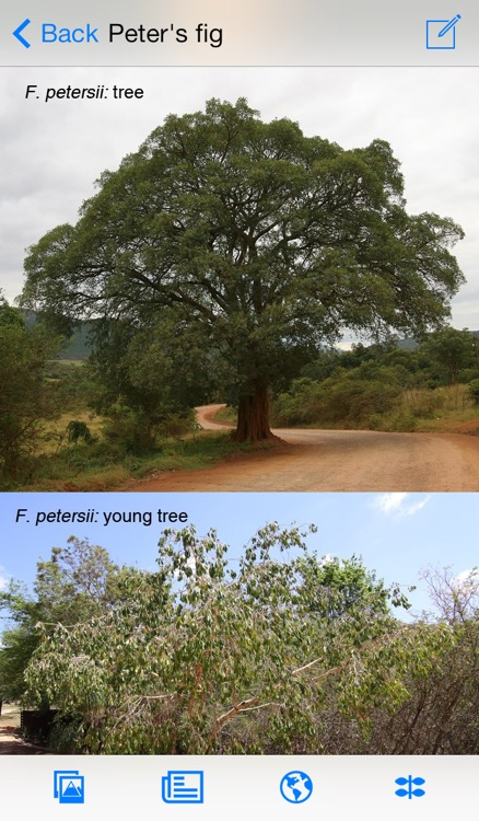 eTrees of Southern Africa LITE