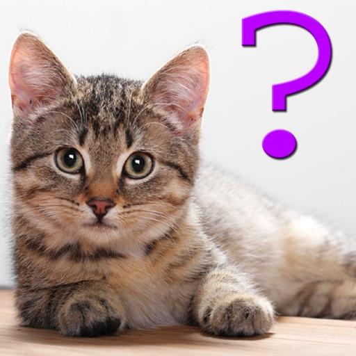 Cat Breed Quiz for iPad