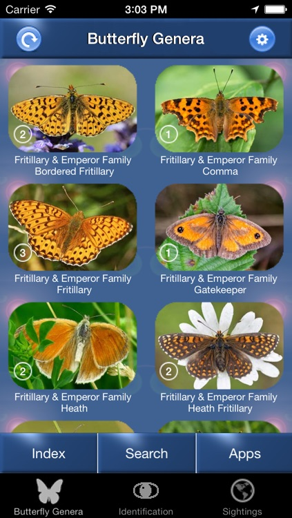 Butterfly Id - The British Identification Guide to Butterflies