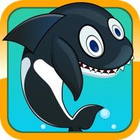 Codes for Sea Whale Splash Hack