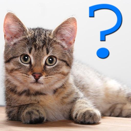猫の品種クイズ