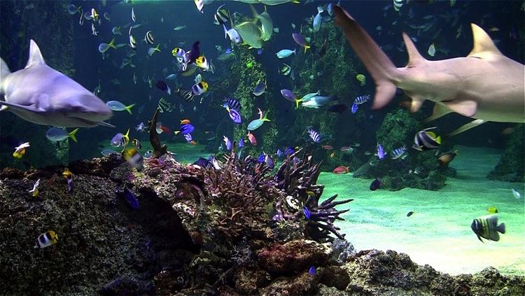 Aquarium live free