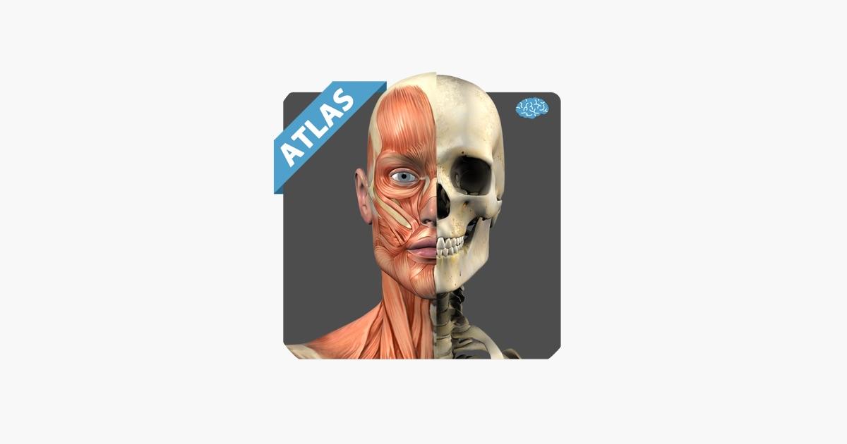 Anatomy Atlas Free on the App Store