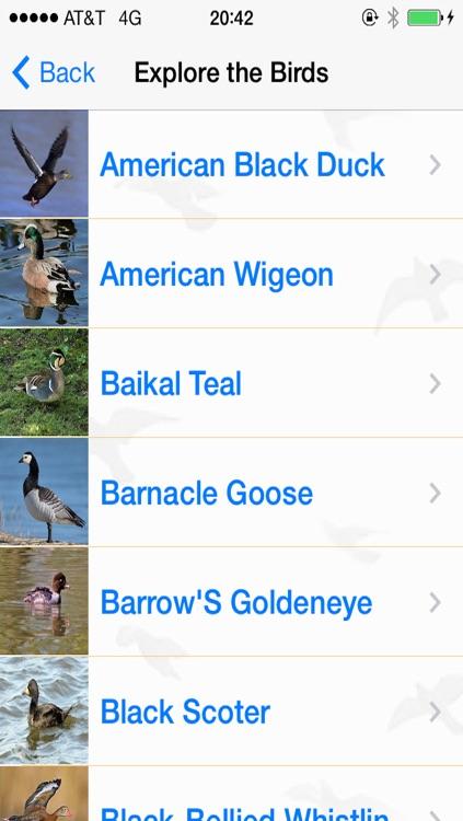 Bird Watching Guide & Identification
