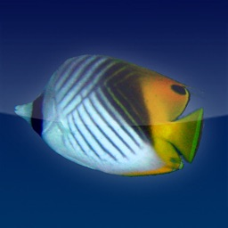 FischFinder – Wordwide Fish ID, Fish Guide and Reef Guide