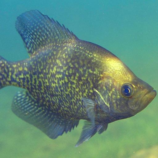 Southeastern Freshwater Fish