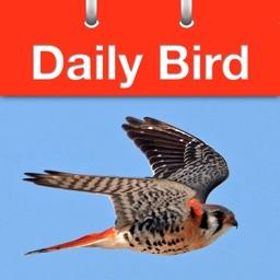 Daily Bird - the beautiful bird a day calendar app