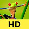 Fondos de pantalla y fondos para iPhone 6/6s/5s: Foto y Temas HD para la pantalla de inicio