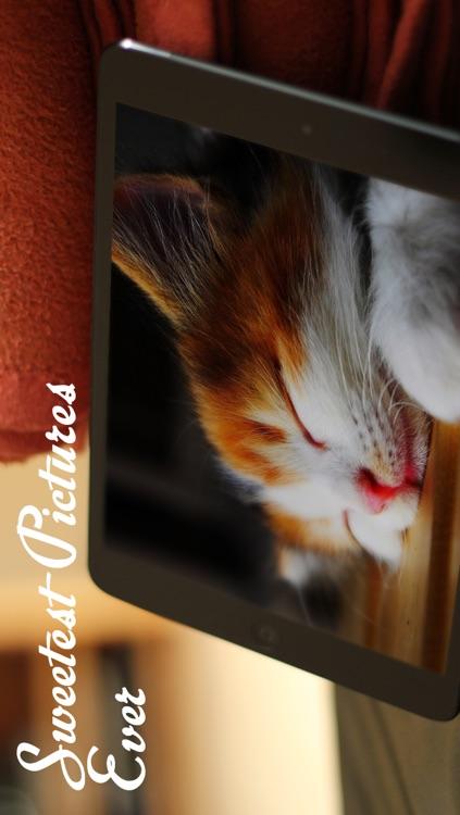 Cats™ screenshot-4