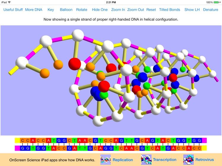 OnScreen DNA Model screenshot-4