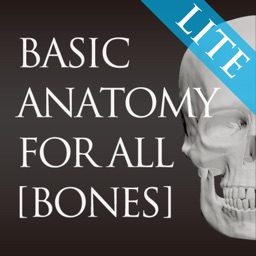 basic anatomy for all [bones] lite