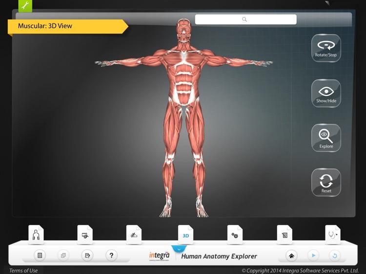 Human Anatomy Explorer - Muscular System screenshot-3
