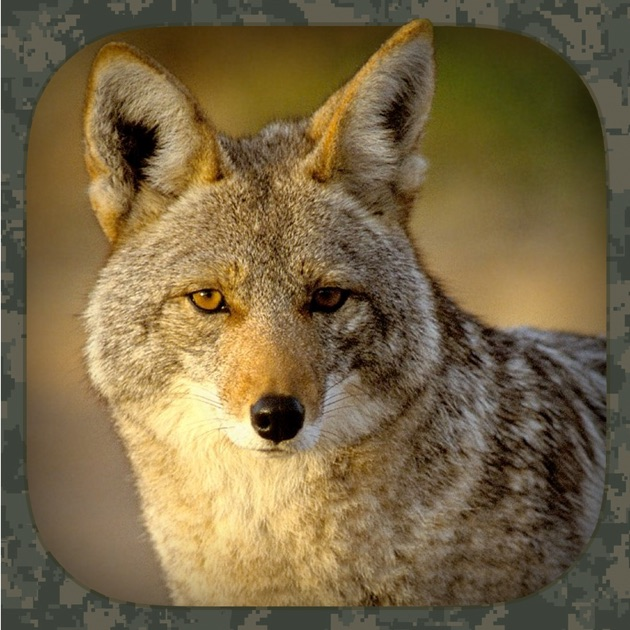 Coyote Hunting Calls on the App Store