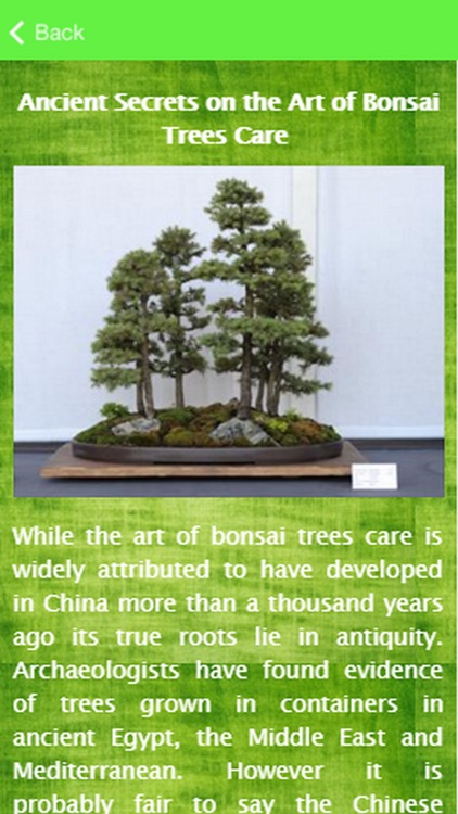 Bonsai Tree Care Guide
