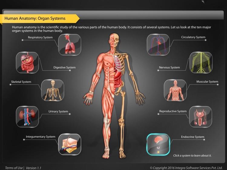 Human Anatomy Explorer - Endocrine System