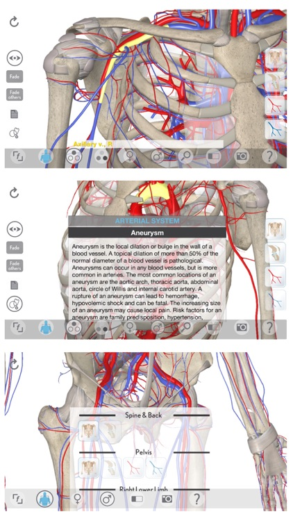3D Organon Anatomy - Heart, Arteries, and Veins