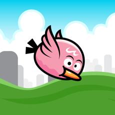 Activities of Bouncy Bird - Game