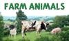 Sounds of Farm Animals