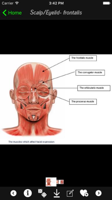 Human Muscles Infoのおすすめ画像5