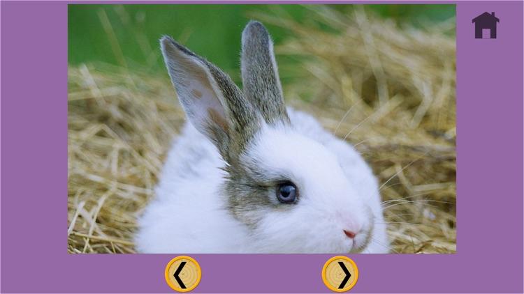 prodigious rabbits for kids - free screenshot-4