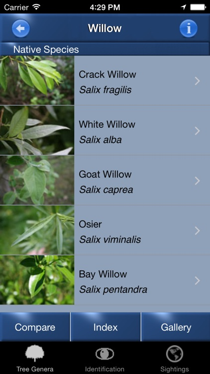 Tree Id Netherlands - Identification Guide to Trees screenshot-4