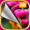 HD Flower Wallpaper.s – Beautiful Collection of Floral Spring Background Picture.s