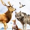 ジャングルの中で冒険を撮影野生のスポーツ狩り: スナイパー - iPhoneアプリ