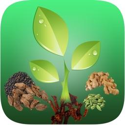 Natural Ayurvedic Remedies Herb Free