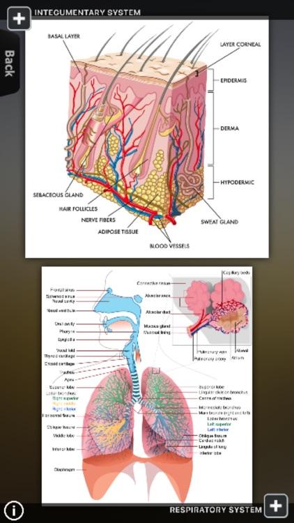 Human Body Database