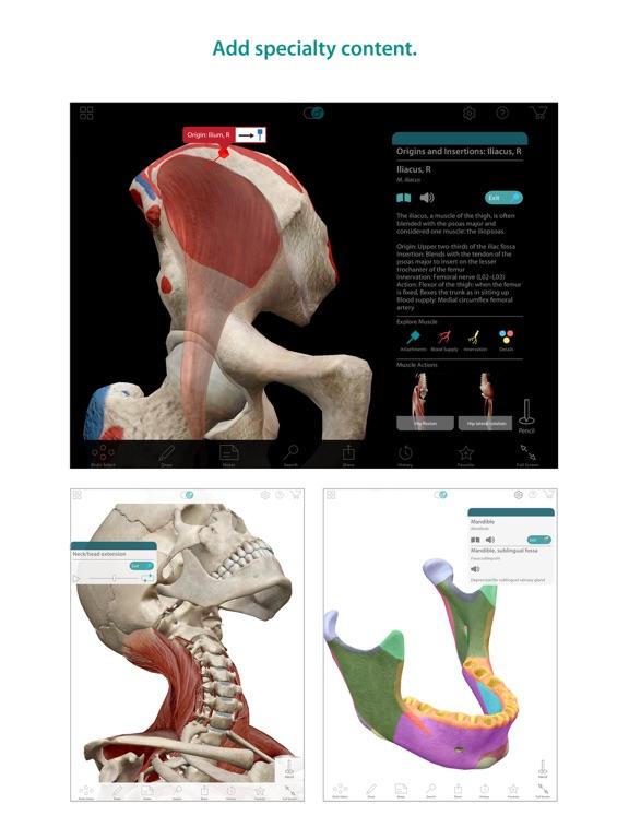 Human Anatomy Atlas – 3D Anatomical Model of the Human Body-ipad-4
